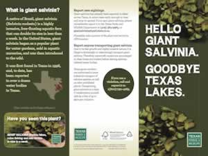 Learn about how to stop Giant Salvinia in Texas lakes